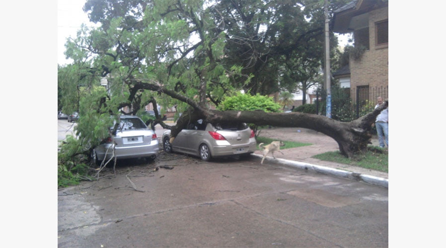 Does my insurance cover me when a tree falls on my car?